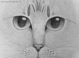 Cat drawing gray pencil by Maanhart