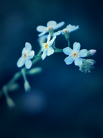 Forget Me Not by Rustmouth
