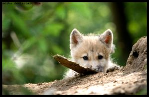 so small and so cute by morho