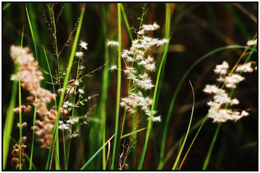 wild grass by yellowminded