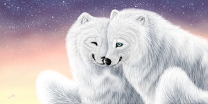 Arctic Love by Humius