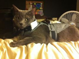 Lestat I'm a kitty cat and I dance, dance, dance.. by MsSleepyCat