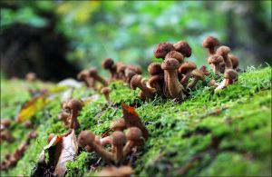 Honey fungus valley by Hechicero