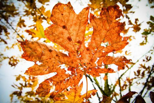 leaves of fall by the1deva