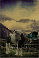 Gypsy Horse by alphabetdesperado