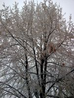 Frozen Tree by anycrow