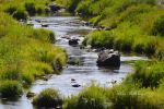 The Feather River II by Scooby777