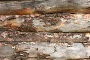 Wall of Old Barn by GrungeTextures