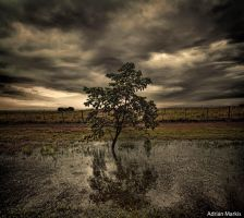 arbol by Markisphoto