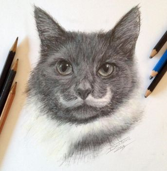 Pencil Cat fast Sketch by AtomiccircuS