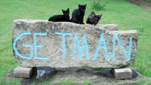 Kittens on a Sign by gaarasbabe2000