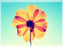 A Flower by preved-preved