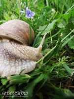 snail's smile by GreenSlOw