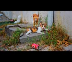 Urban Cats - 10 by MARX77