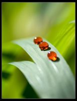 Drops of Red by george-kay