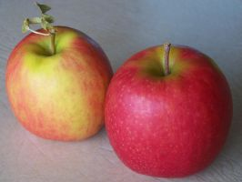 Two Apples Dry by Stockopedia