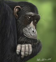 frodo the chimp by Fresh-H