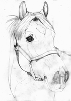 Golden Champagne Roan Horse SKETCH by Yankeestyle94