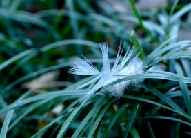 Feather Light by melanie12271994