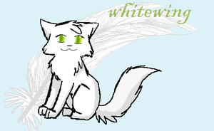 Whitewing by Spottedfire-cat
