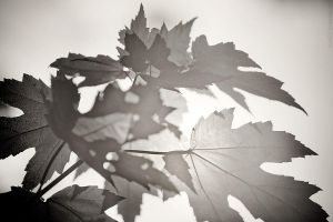 foliage by detail24