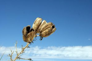 Seeds of fall by PietschPhotography