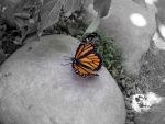 Butterfly.. by thewongin8tor