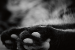 Pepper's paws by reckIess
