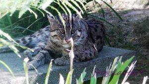 fishing cat shot 3 by frogslave69