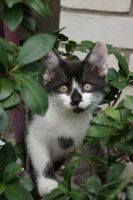 Kitten 3 by thessias
