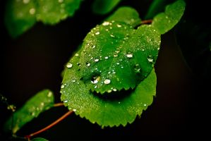 Droplets Big And Small v2 by EvanHodsonGallery