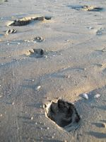 Puppyprints In The Sand by FlashOfGrey