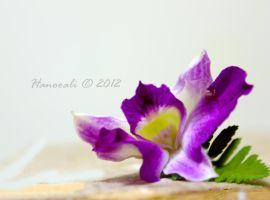 Day 023 Project 366 -  Passional Purple by Hanooali