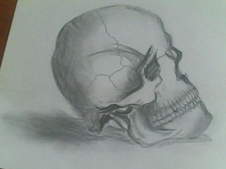 First attempt to draw a Human skull by Thikrayat