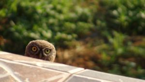 Whooo ? by baza13