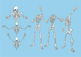 Free Skeleton Pack by artamp