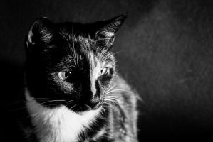 Not-So-Dignified Portrait Cat by wetdryvac