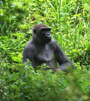 Gorilla in the Green by GigaGlomp
