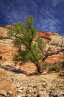 Living in Zions by mjohanson