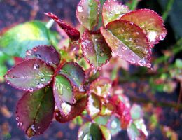 Raindrops by SalmasPhotos