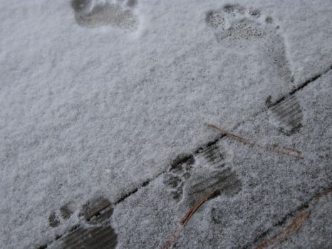 Printed in the Snow by lolol9