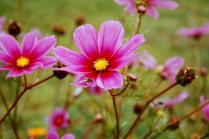 Pink Flowers II by LilP0p