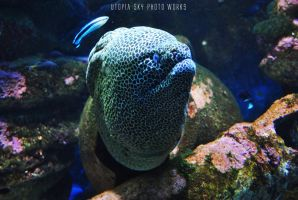Honey Ray by UtopiaSkyPhotoWorks