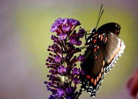 Buddleia and Butterfly IV by Foxytocin