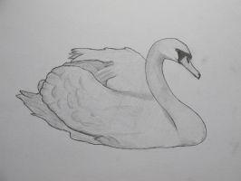 Swan by loneswan