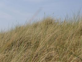 Dune Gras 07280066 by Netzlemming
