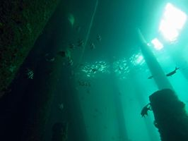 old wives Mornington pier by Werden