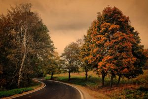 Autumn road II by tomsumartin