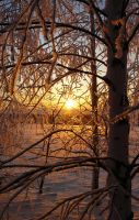 Winter Sun by Anna-Belash