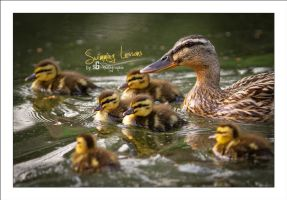 Swimming Lessons by sG-Photographie